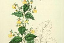 Botanicals in painting