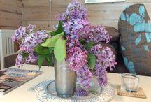 Blomstertid året runt / Sommarblommor kesäkukkia, talviasetelmia, vinterarragemang