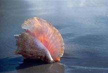 Shells / by Samantha Elizebeth