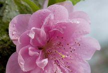 Blüten zart lieblich ein Hauch süßer Duft, LIEBE ❤