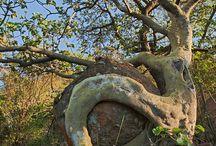 Trees ,δεντρα