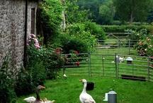Gæs i haven / Indhegning
