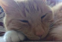 Mog / A Collection of Moments Shared with the Ginger Boy