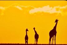 Sunsets of Around the World!!!!!!!!!