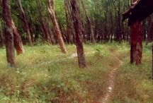 back to nature / tak ada tempat paling indah selain di alam :)
