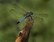 Dragonflies / by Cheryl Lange