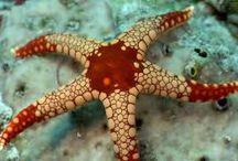 Estrelas do mar.