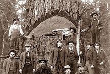 Lumber Era