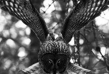 Eagles, hawks & co.