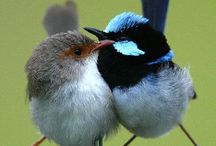 Birds / Mainly Australian birds