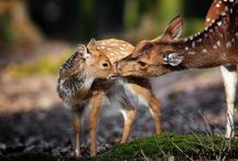 Baby deer / Baby deer pictures