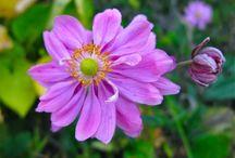 plants I love / by wildgingersnap