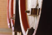 Carena / Se andate a San Giorgio Monferrato, fermatevi a scoprire la collina interamente vitata di Tenuta Carena: dove abitano coscienza, passione e rispetto della tradizione