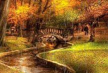 Autumn Dreams / by Sharon Murray