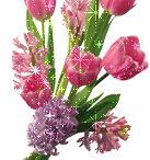 Flower , flower