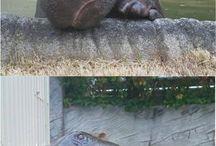 baby hippopotamus