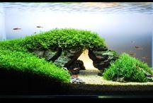 Zen Cage / Aquarium