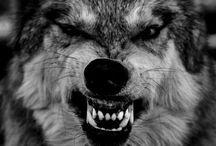 Tattoo hjort ulv