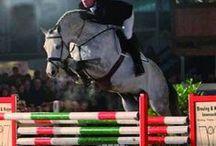 Last Man Standing / 2001 Stallion by Lovari  Approved: OS, Westf, Sachs, BA, MV, Sadhu  Frozen Semen available