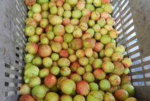 Frutas Brasileira