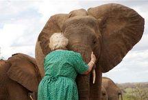 """Elefante / """"O elefante é considerado símbolo da boa sorte, sabedoria, persistência, determinação, solidariedade, sociabilidade, amizade, companheirismo, memória, longevidade, poder."""""""