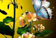 butterfly dragonflies