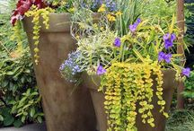 Keep Container Plants Looking good