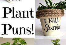 Craft - Planters