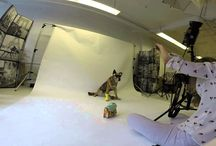 Chloe Hubal / AKA Fashion Fido Shelter dog that does it all...