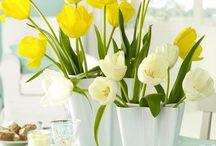Tulipes yellow