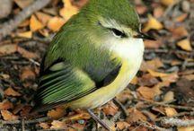 Abby oiseau