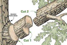 ağaç kesme