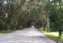 Magnolia Ave