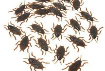 Insects! / If you are looking for insects, we have a great variety! From spiders to ants you will find everything you need at an affordable price!