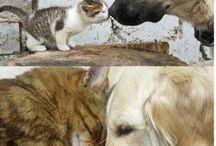 katte og hunde