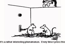 Behavior Humor