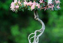 Flower's bonsai