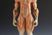 Anatominiac