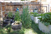 Gardening: Food