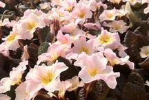 Floral Delight! / by Rachael Nichols