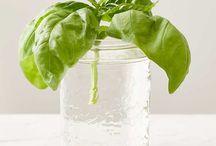 Herbes dans pot d'eau