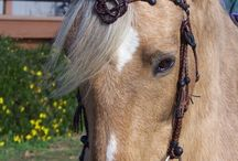 Horse Gear / Tack and other horse supplies