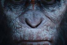 planète de singes