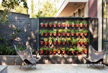 garden, outdoors