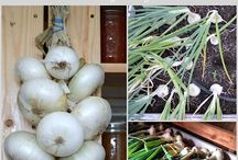 Onions tips / Tips on onion growing