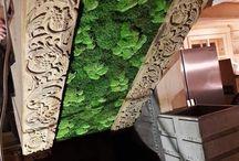 MECH, KWIATY I ROŚLINY STABILIZOWANE / Oferujemy dekoracje z Mchu oraz Roślin Stabilizowanych www.egdesign.pl