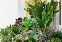 Gardens & Plants / Greenery ideas.  Flowers, herbs, and veggies, oh my!