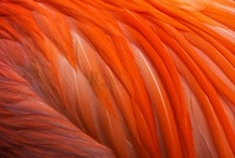G A M ℬ I T / The Nature of Color ; Red Orange