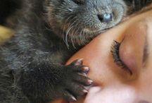 Animais e bichos de estimação