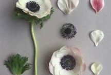 deconstructii flori